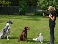 Janarlee dog-training photo