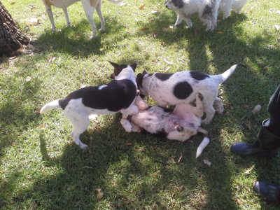 Photos of Puppy Play Day